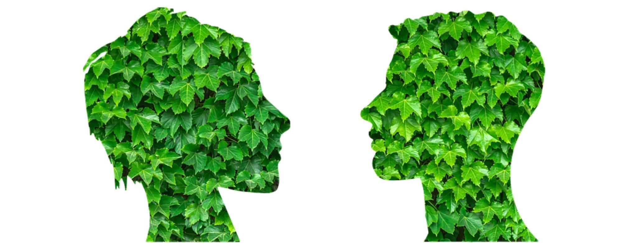 sustainable mindset