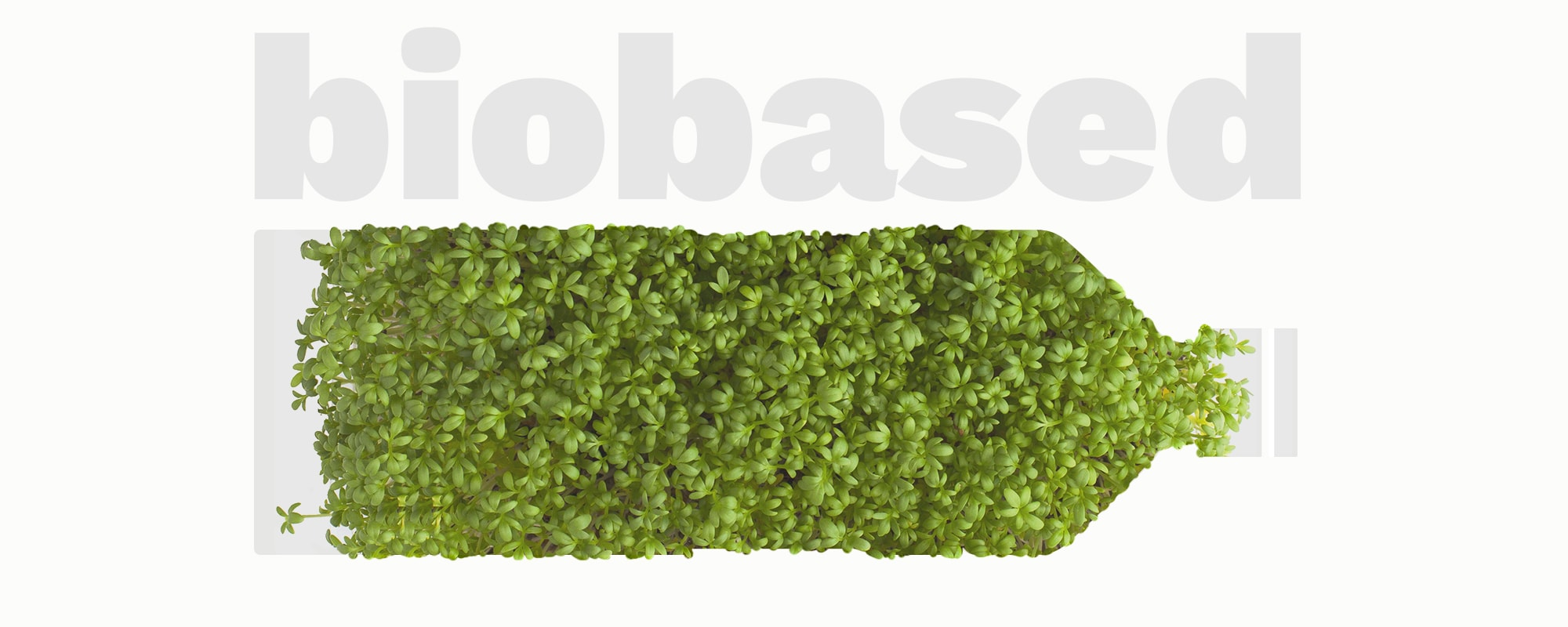 Biodegradable bioplastics: are they also biobased?