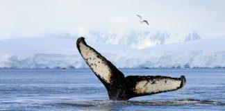 fine tokyo whale