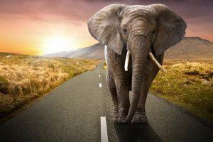 L'Elefante indiano dice no al Petro