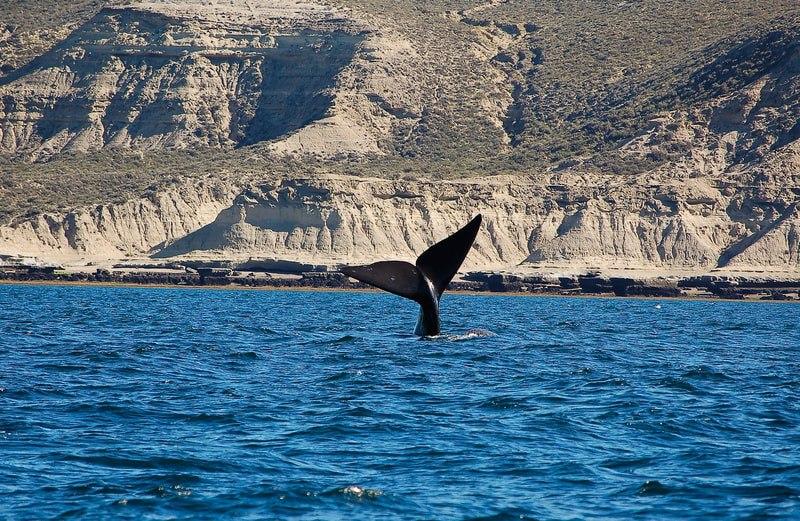 Nei mari delle crypto comandano le Balene
