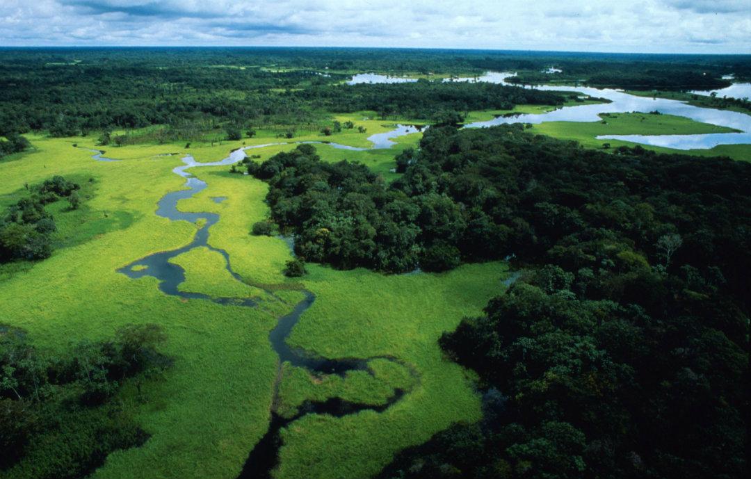 La blockchain Komodo per salvare la giungla in Perù