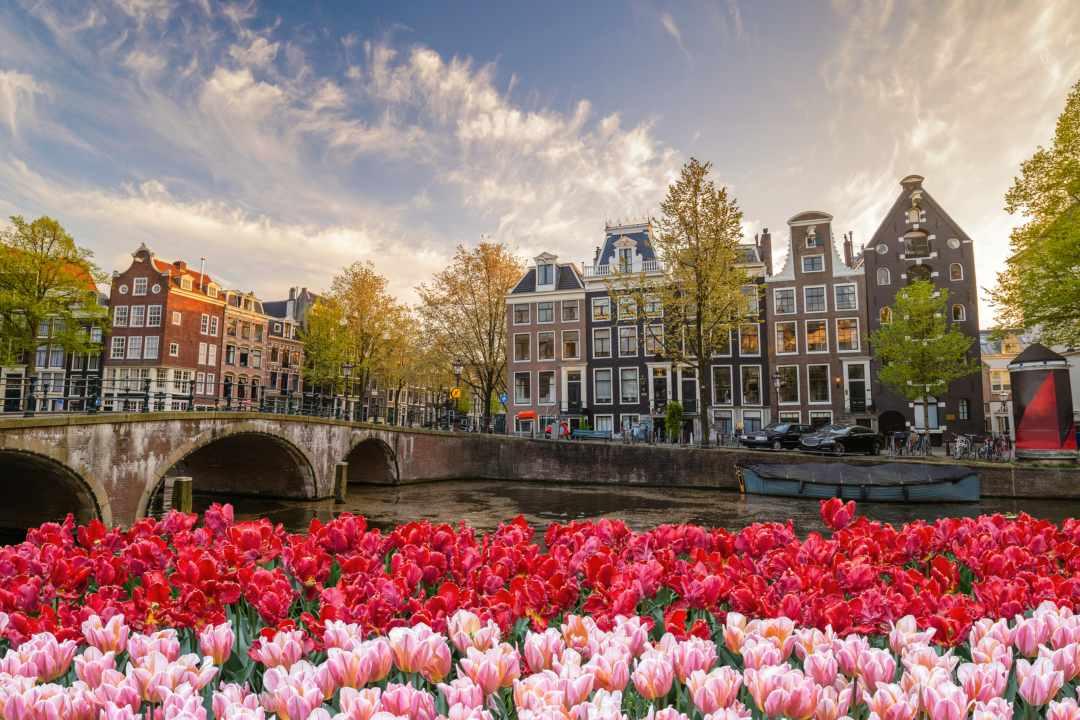 Tutto quello che c'è da sapere su Grin e Amsterdam