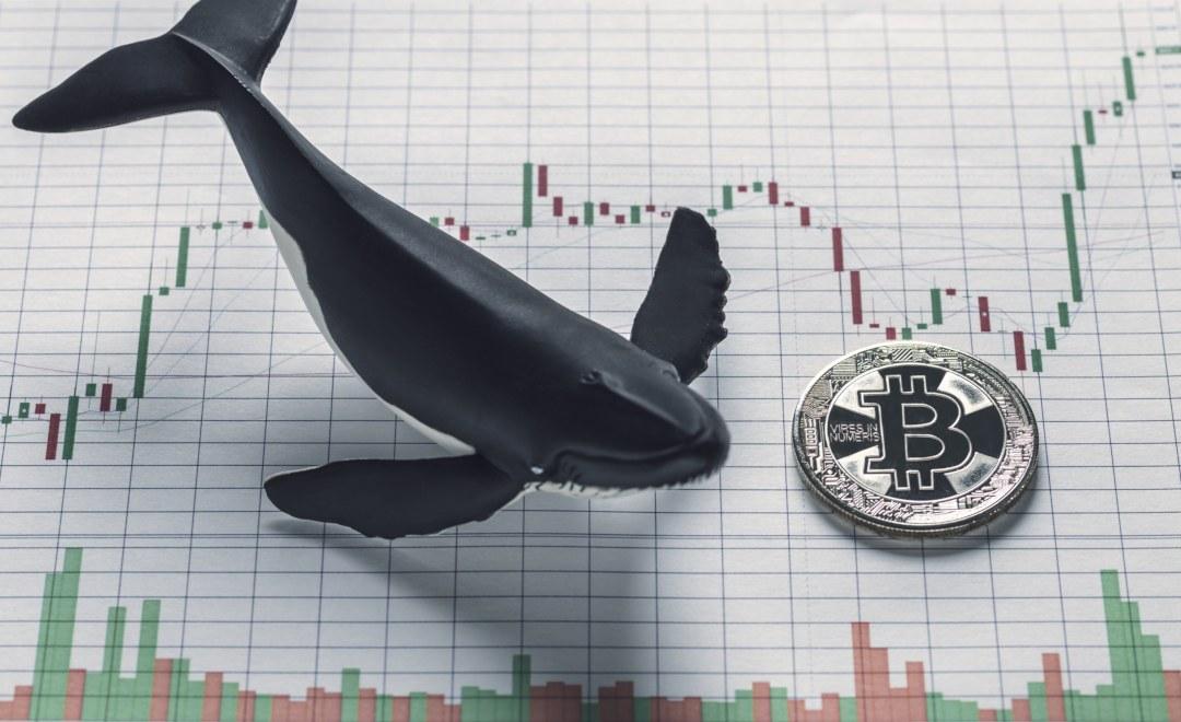 Whale Alert fornirà supporto a Binance