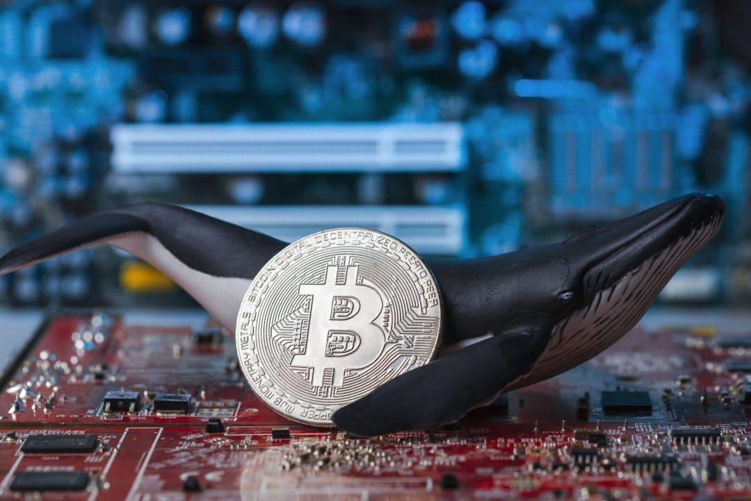 """Nicholas Merten: """"il prezzo di bitcoin troppo influenzato dalle balene"""""""