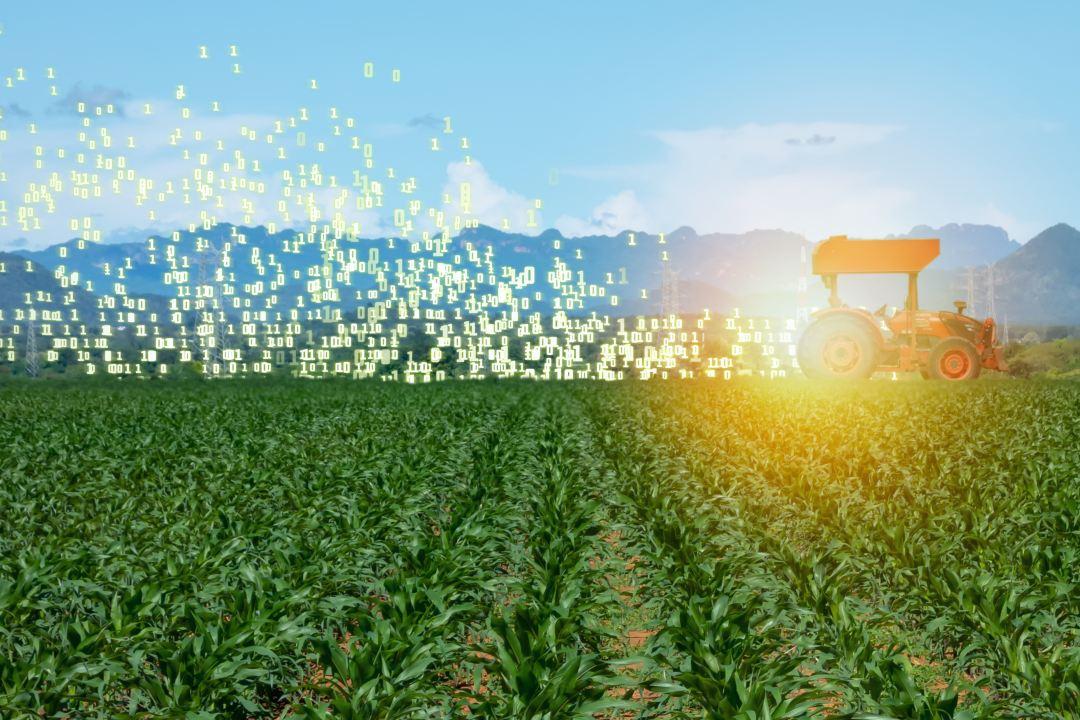 Italia: la blockchain per i prodotti alimentari secondo il Ministro dell'Agricoltura