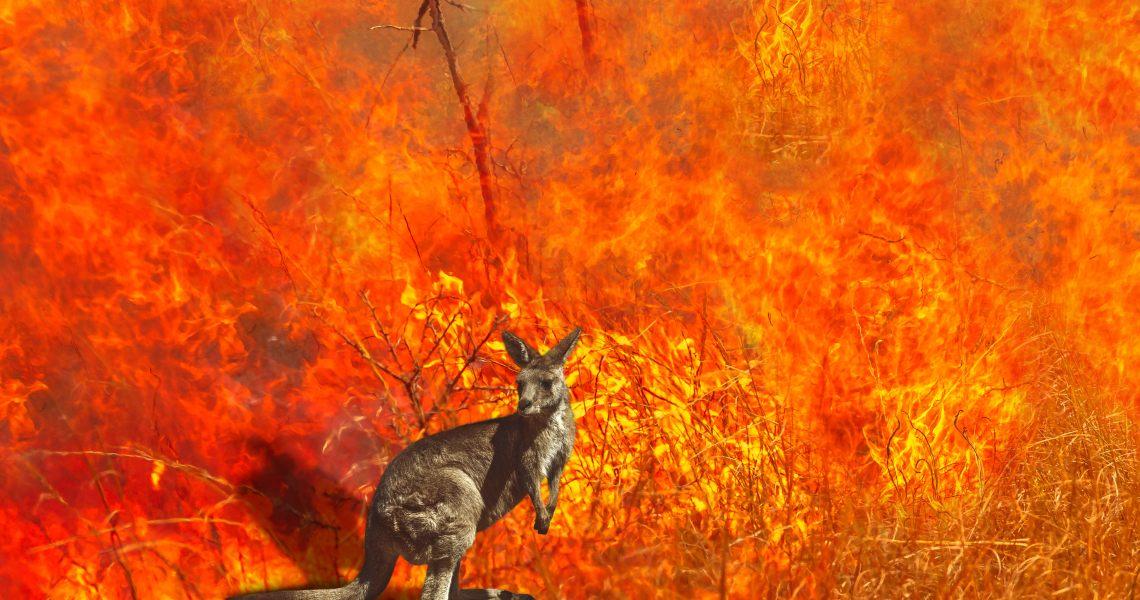 Australia on Fire: come inviare donazioni in crypto