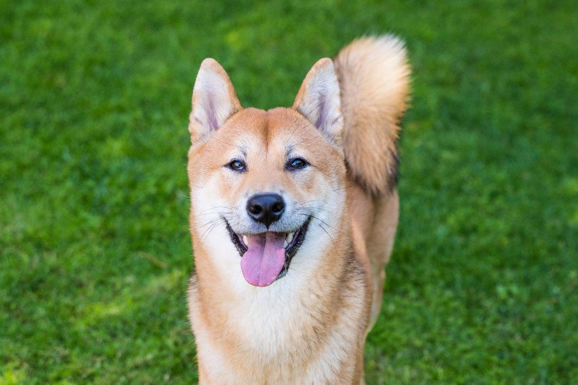Ricca con Dogecoin fa una donazione ad un canile
