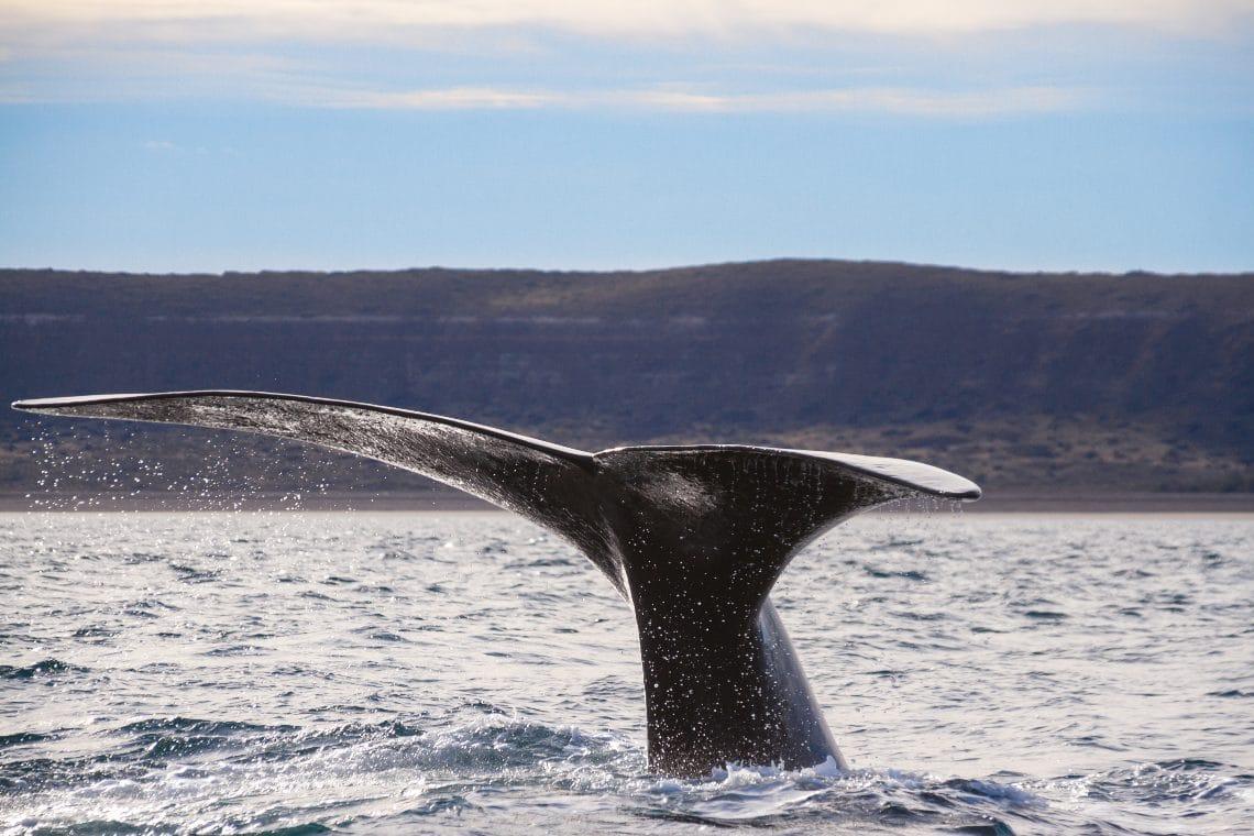 Bitcoin: le balene stanno continuando ad accumulare