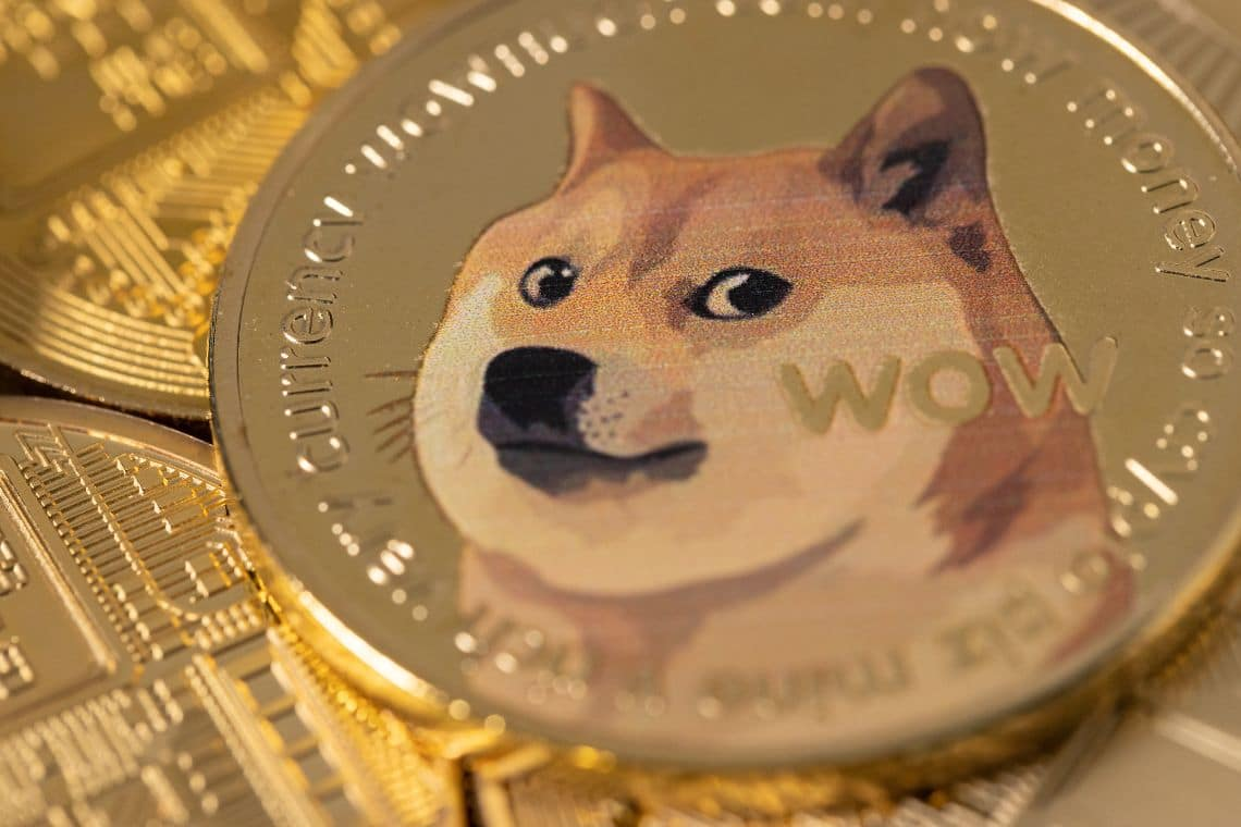 Dogecoin e PAWS Chicago: donazioni crypto per aiutare gli animali