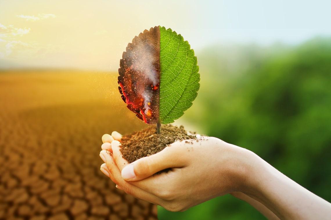 ONU: gli NFT ora combattono il cambiamento climatico