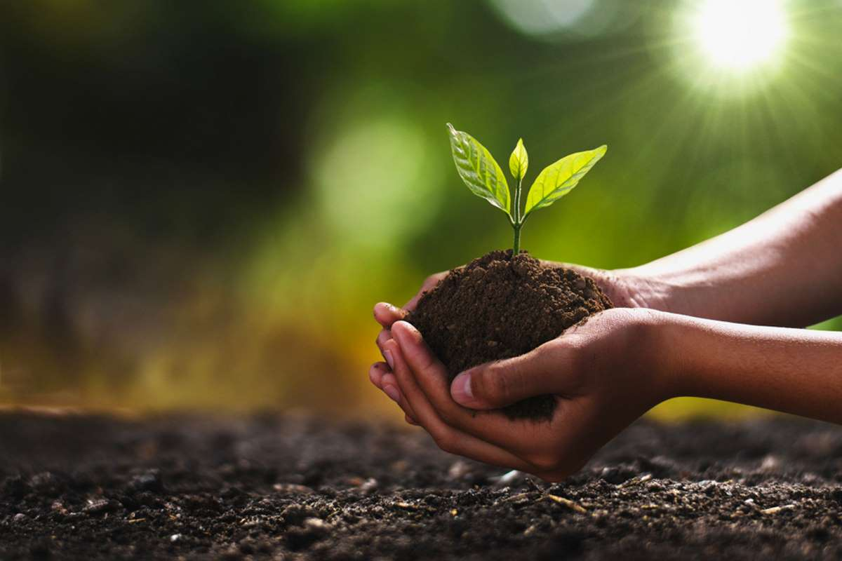 Un nuovo Bitcoin ETF pianta alberi per compensare l'impatto del mining